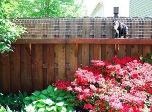 Pet Friendly Garden Design Ideas Jim S Mowing Nz