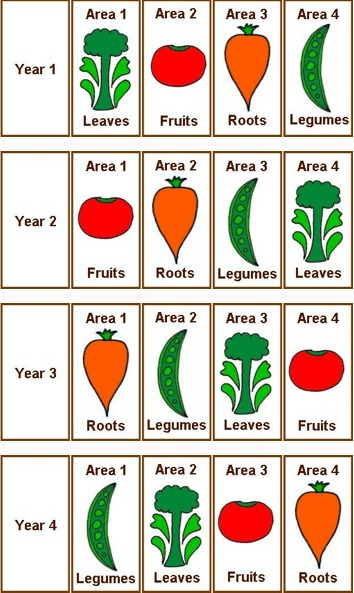 Crop Rotation for Growing Vegies