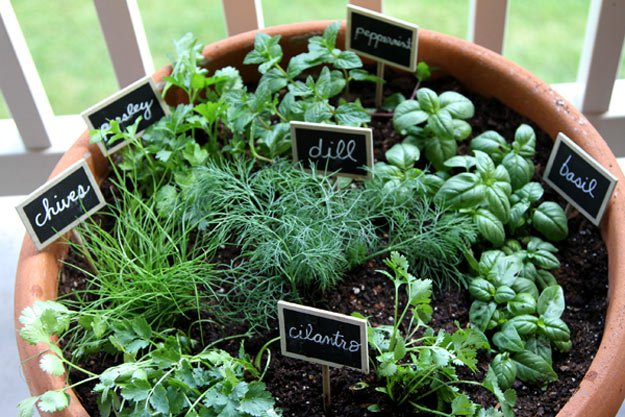 10 Errors for Beginner Herb Gardeners to Avoid