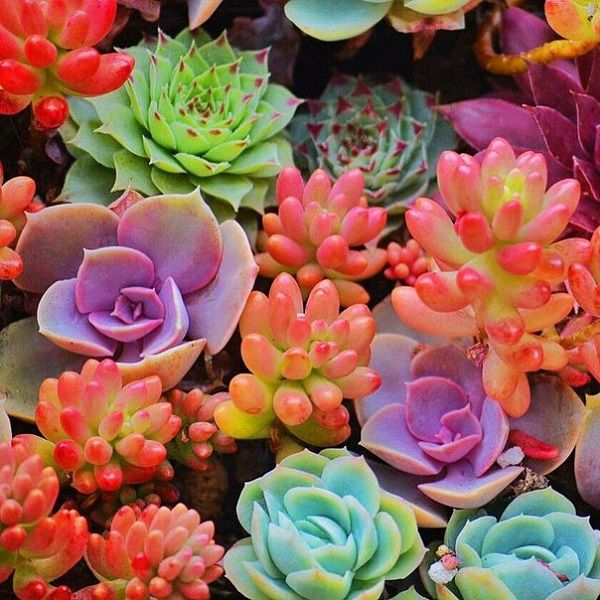 How To Properly Care For Succulent Plants