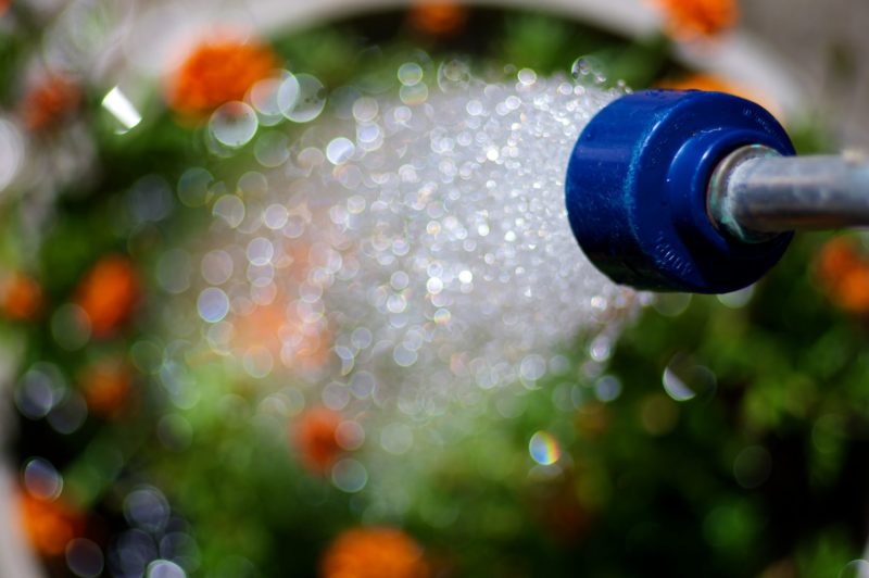 8 Tips For A Water Wise Garden