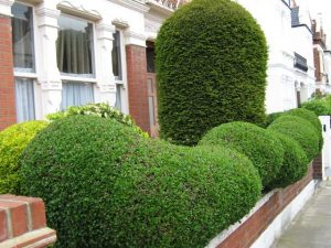 When To Prune Hedges And How Often
