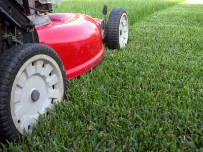 6 Considerations in Choosing the Right Turf for Your Home