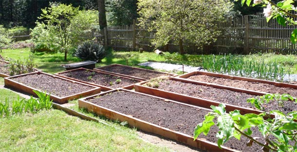Preparing To Plant Winter Vegetables
