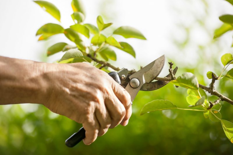 Different Pruning Methods