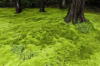 Chemical Control of Moss in Lawns