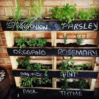Herb Gardening In Unique Ways