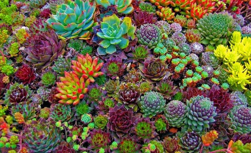 How to properly care for succulent plants - Jim's Mowing NZ